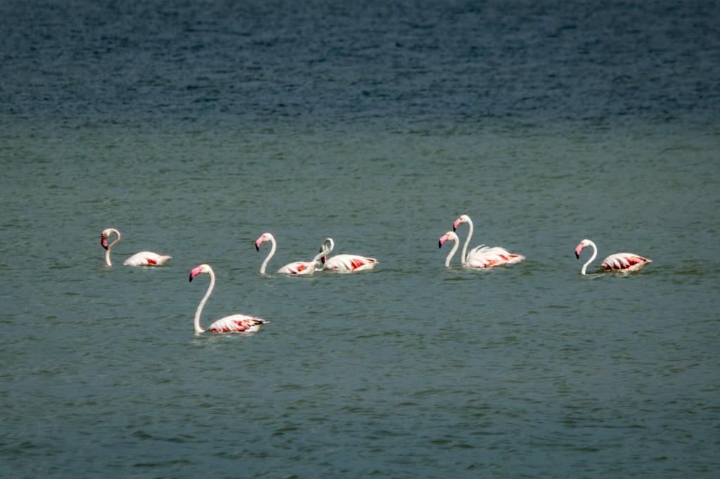 flamingo_ibiza-4346