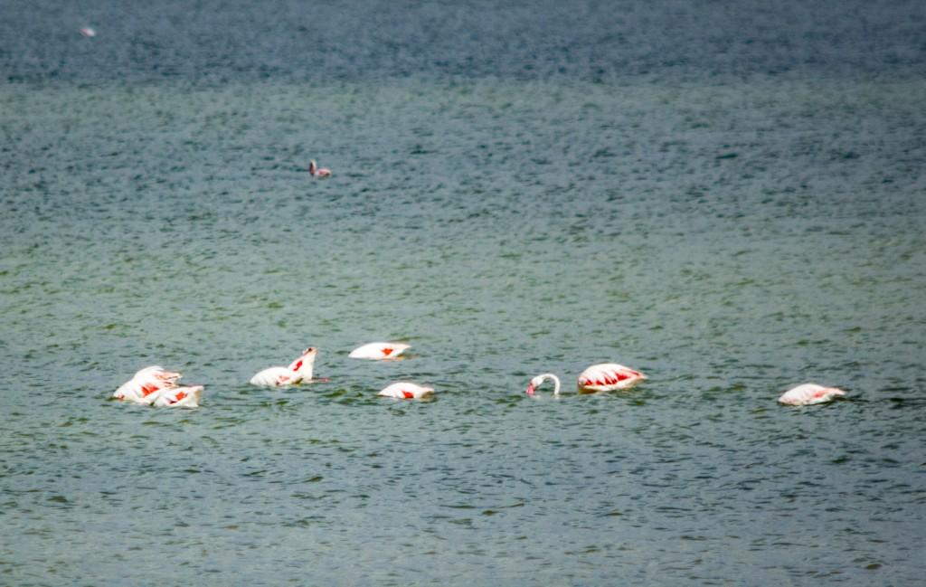 flamingo_ibiza-4355