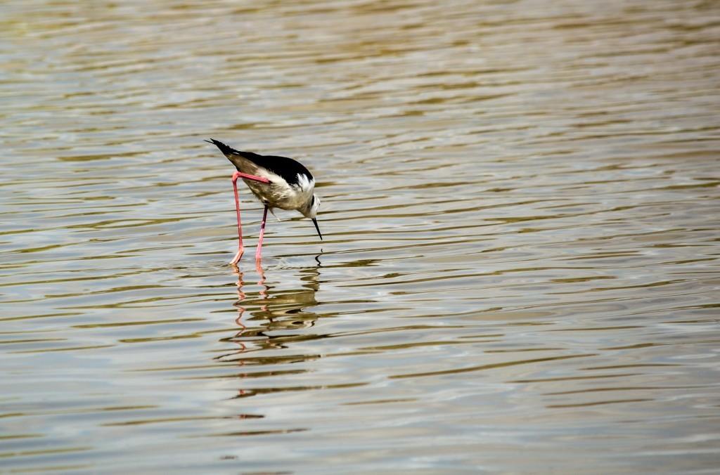 flamingo_ibiza-4358