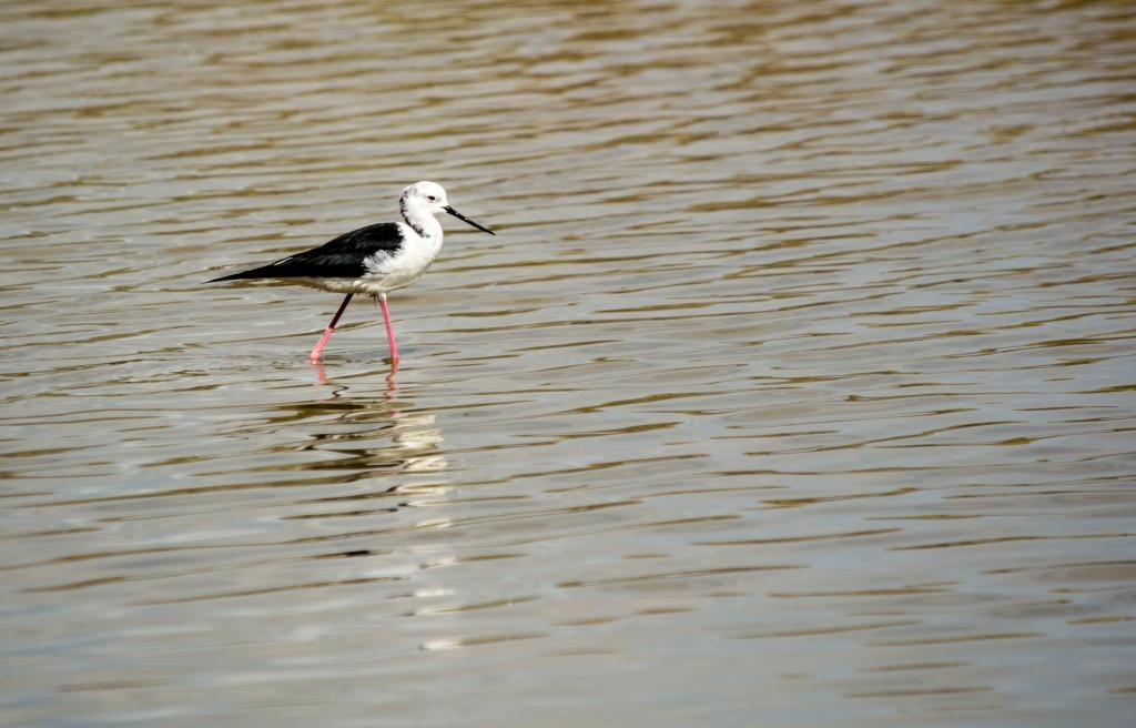 flamingo_ibiza-4360