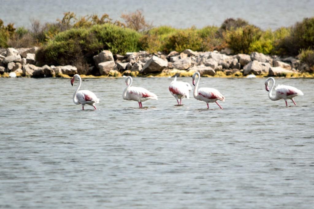 flamingo_ibiza-4388