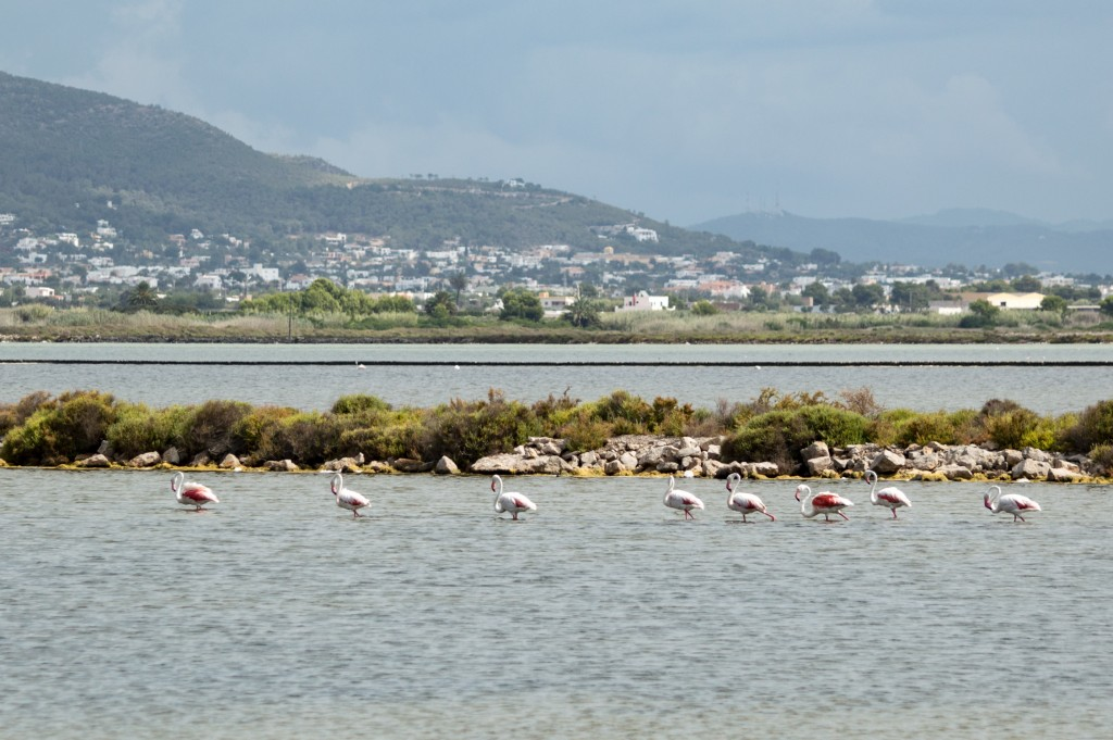flamingo_ibiza-4390