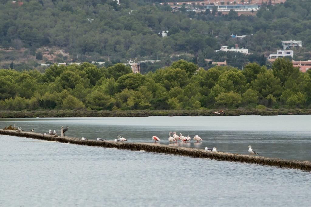 flamingo_ibiza-4454
