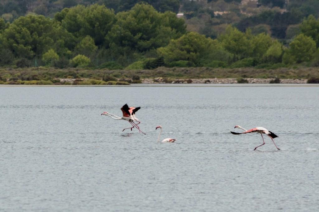 flamingo_ibiza-4469