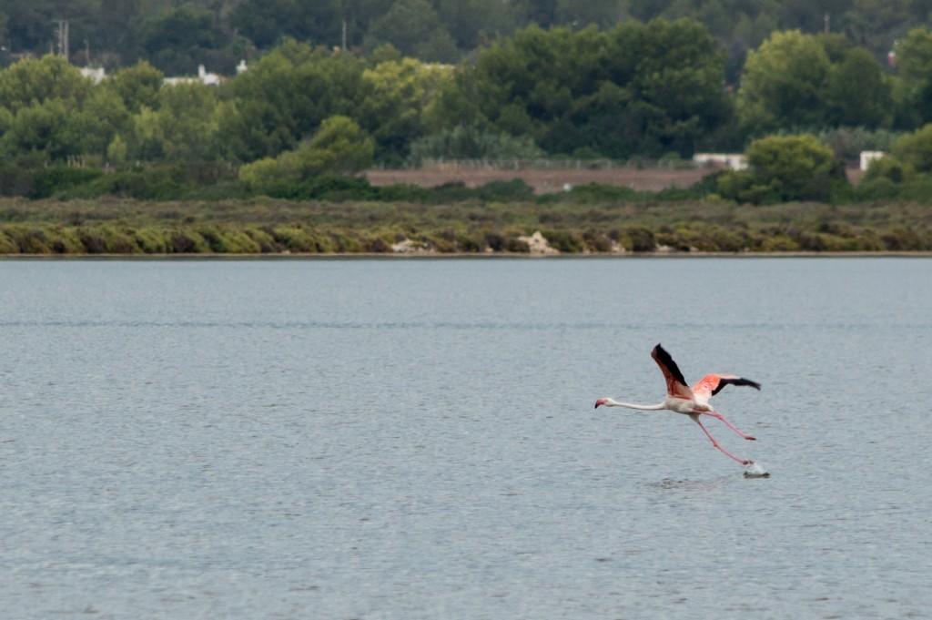 flamingo_ibiza-4477