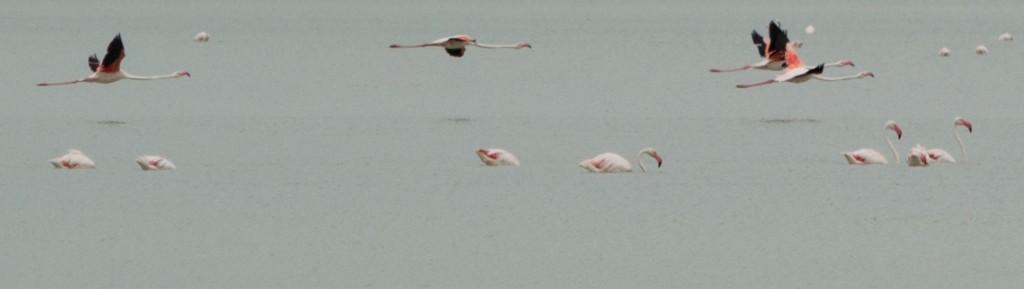 flamingo_ibiza-4490