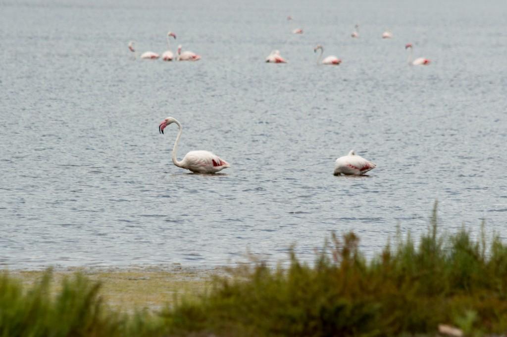 flamingo_ibiza-4496