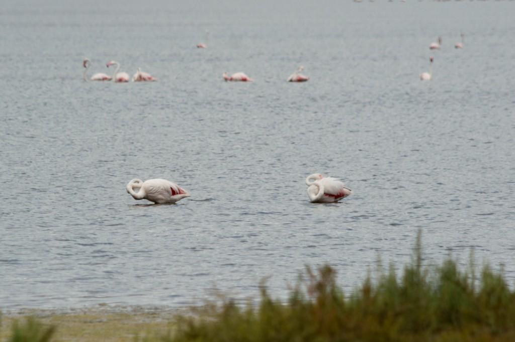 flamingo_ibiza-4499