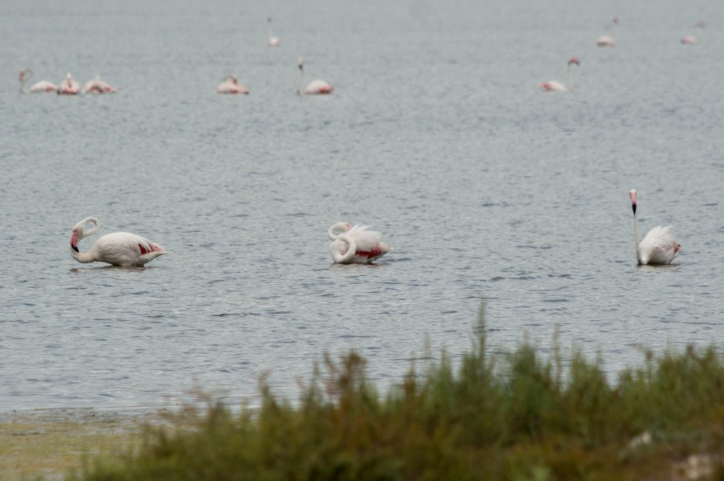 flamingo_ibiza-4502