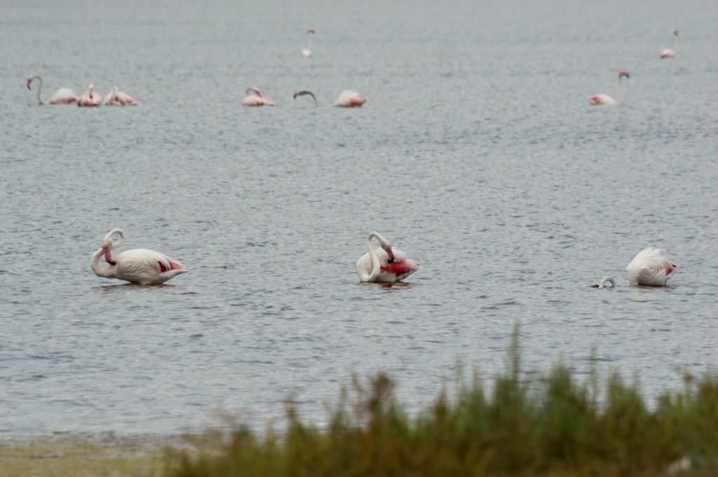 flamingo_ibiza-4503