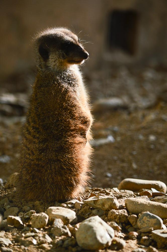 2015-12-zoo-7551