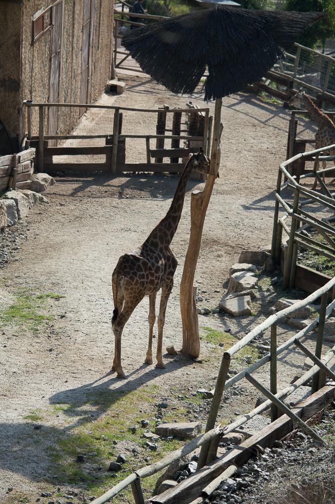 2015-12-zoo-7768