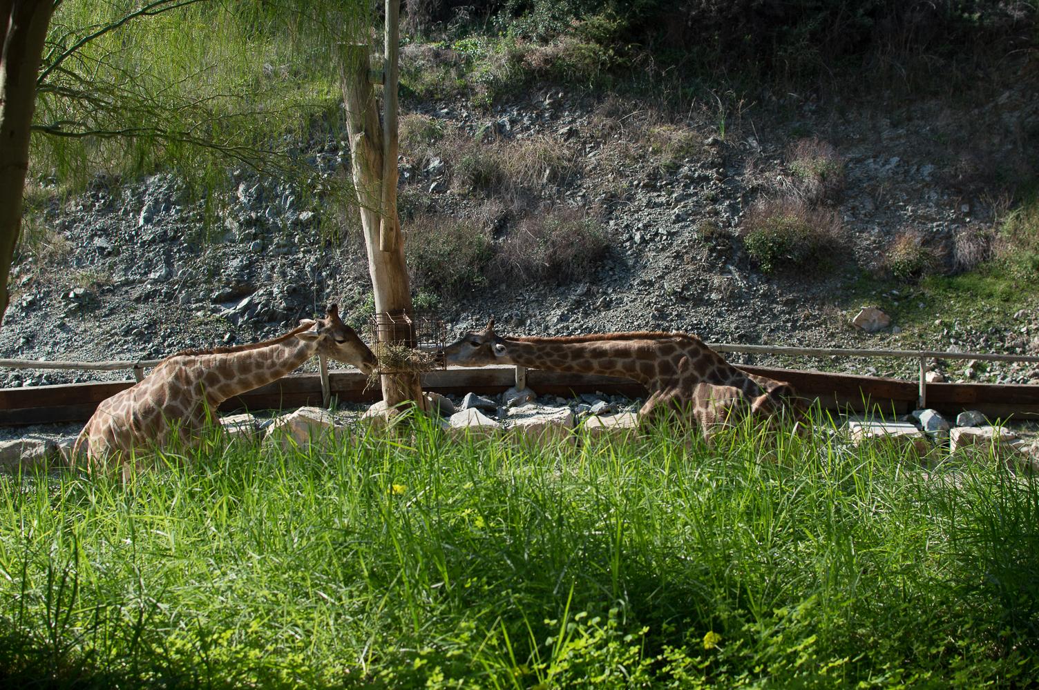 2015-12-zoo-7777