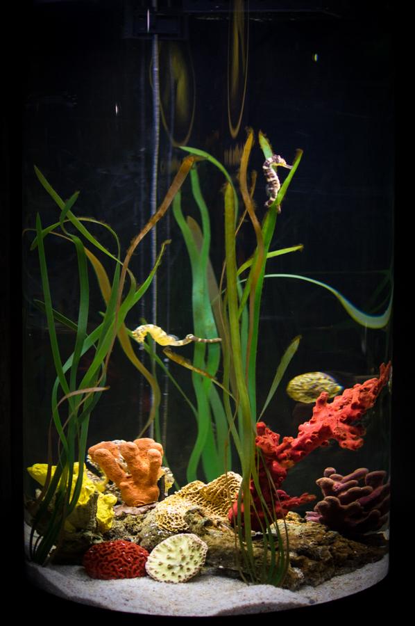 SeaLife Benalmadena